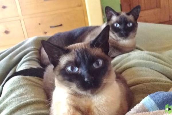σπίτι γάτες