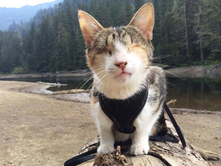 honey-bee-blind-cat-1