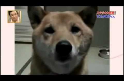 Ο σκύλος με το… απαλό γάβγισμα!