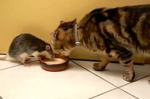 Αυτή η γάτα και ο ποντικός ζουν μια αρμονική ζωή!! Αξιολάτρευτο!! (Βίντεο)