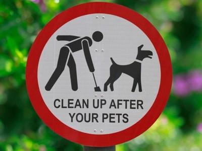 Τι λύση βρήκε μια πόλη για τα περιττώματα των σκύλων!