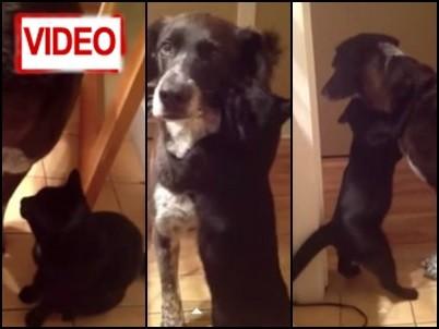 Γατούλα… σφιχταγκαλιάζει τον σκυλο-φίλο της! (video)