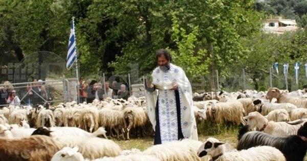 Κρήτη: Πρόβατα περιμένουν τον ιερέα να τα ευλογήσει!