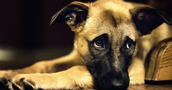 Ο σκύλος μου κάνει εμετό – Γιατί και τι κάνω;
