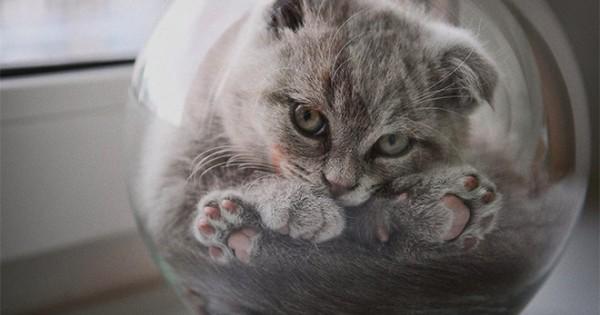 Φωτογραφίες που αποδεικνύουν πως οι γάτες έχουν σώμα υγρό!