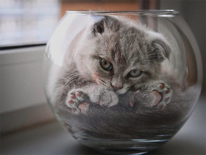 υγρό σώμα Γάτα