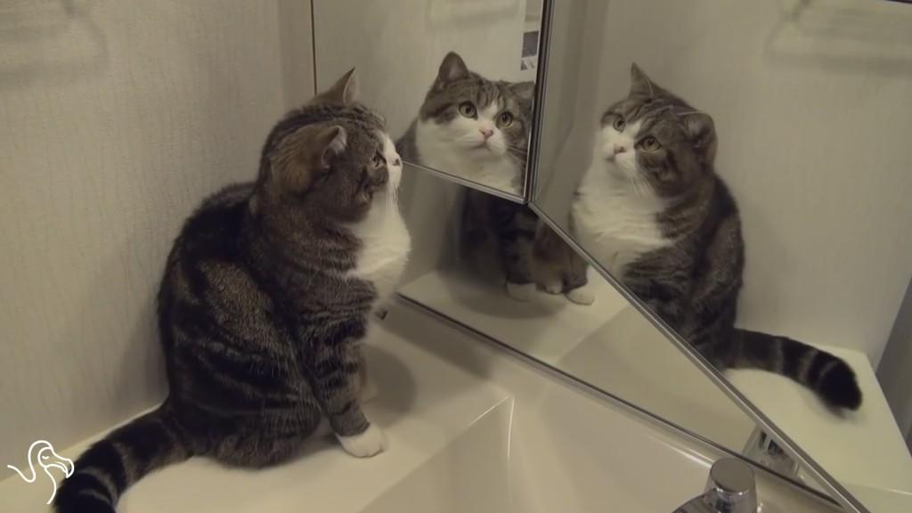 Καθρέφτης γάτες Γάτα