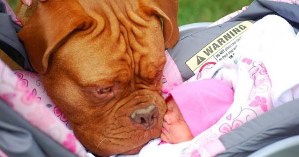 Σκύλος και μωρό: Η πρώτη τους επαφή [vids+photos]