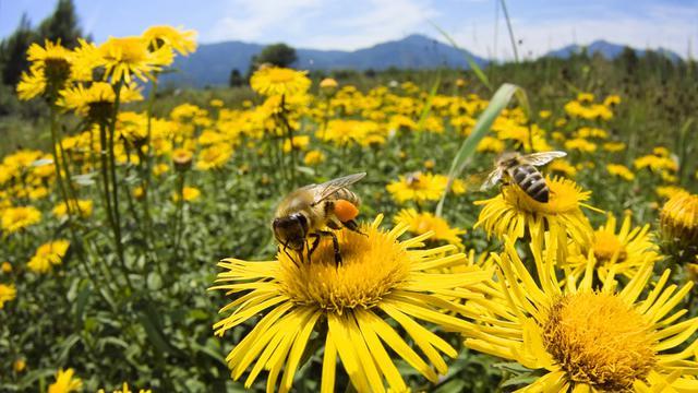 τσίμπημα σφίγγα Σκύλος μέλισσα