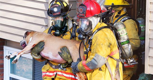 Σκύλος πυροσβέστες διάσωση Βίντεο