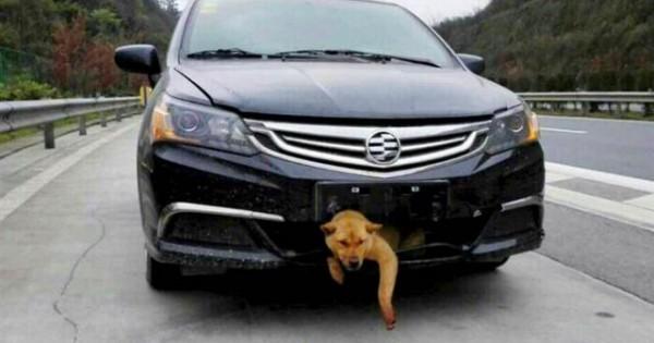 Σκύλος ταξίδεψε 400 χιλιόμετρα σφηνωμένος σε προφυλακτήρα αυτοκινήτου
