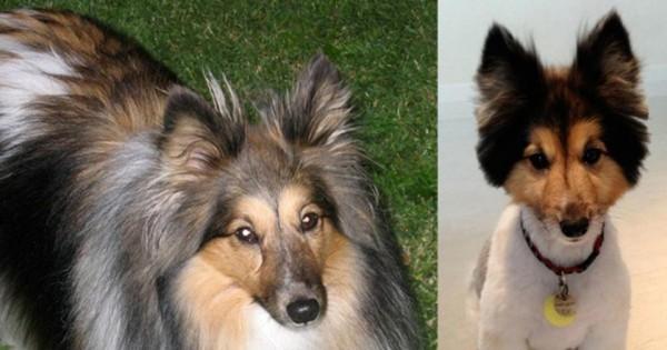 Απίθανες φωτογραφίες: Σκύλοι πριν και μετά το κούρεμα