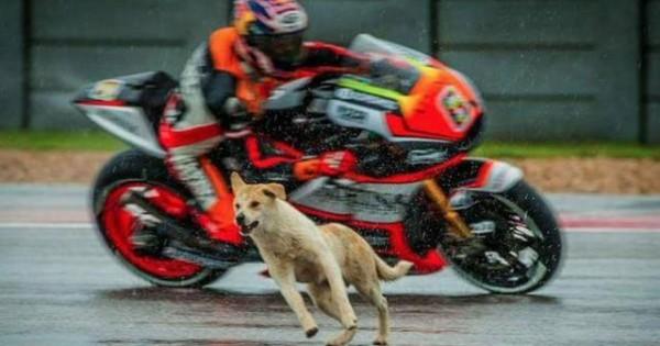 Υιοθετήθηκε ο σκυλάκος που διέκοψε τον αγώνα του MotoGP (video)