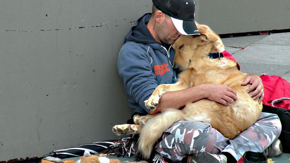 φίλος Σκύλος άνθρωπος