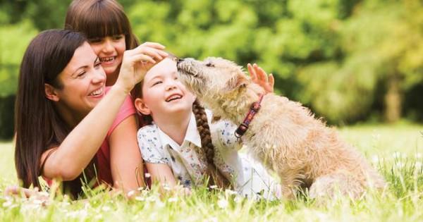 Σκνίπες, τσιμπούρια και άλλα εξωπαράσιτα που μπορούν να βλάψουν το σκύλο σου