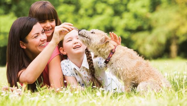 τσιμπούρια Σκύλος Σκνίπες εξωπαράσιτα