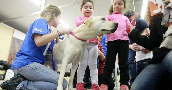 Χαμόγελο του Παιδιού: 8 εκπαιδευμένα σκυλιά για την εύρεση παιδιών που εξαφανίζονται