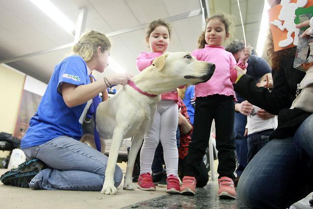 Χαμόγελο του Παιδιού Σκύλος εκπαιδευμένα σκυλιά