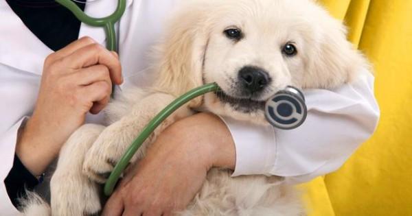 Πώς να επιλέξεις τον κατάλληλο κτηνίατρο