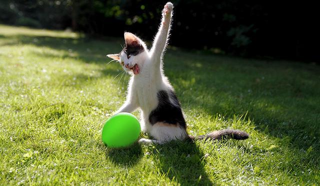 μπαλόνι Γάτα