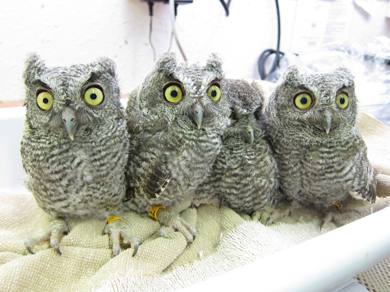 owls_800x600