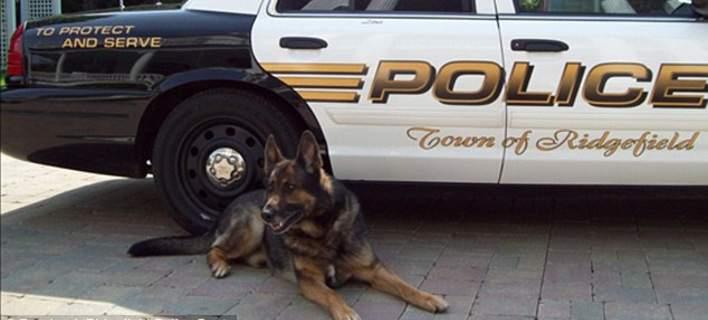 Σκύλος αστυνομικός σκύλος