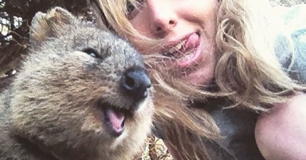 Quokka selfie: Το ζωάκι που βγαίνει φωτογραφία με τους ανθρώπους!