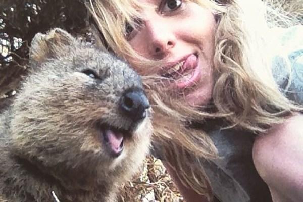 selfie quokka