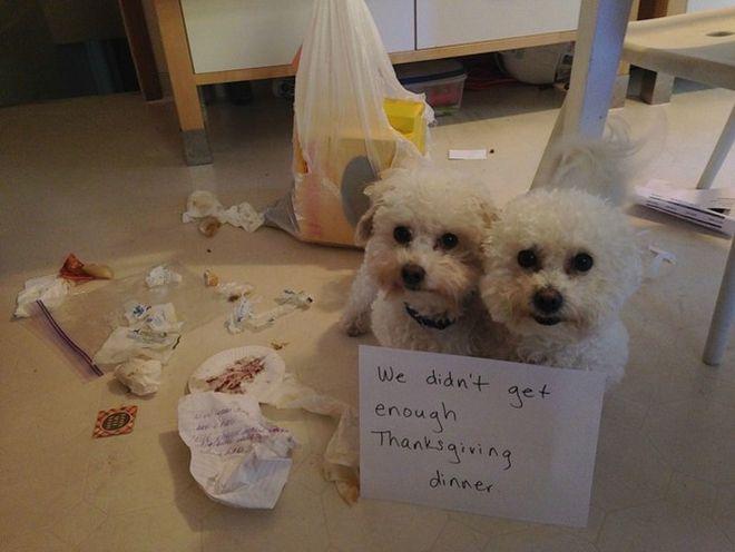 Σκύλος ένοχοι σκύλοι