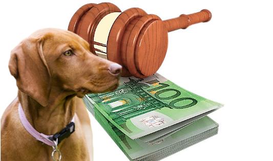 Φθιώτιδα: Πρόστιμο 60.000€ σε 85χρονο που σκότωσε τα δύο σκυλιά του γείτονά του