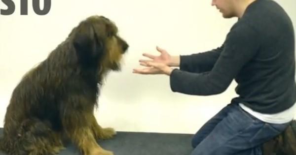 Δείτε πως αντιδρούν αυτοί οι σκύλοι όταν ένας μάγος εξαφανίζει τις λιχουδιές τους!
