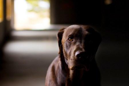 Η βιολογία εξηγεί τον κεραυνοβόλο έρωτα σκύλου-ανθρώπου!