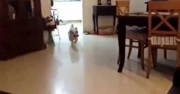 Ξεκαρδιστικό: Σκύλος πάει να ανέβει στον καναπέ και…