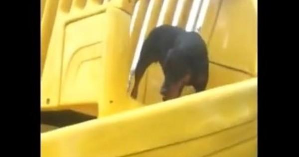 Δείτε πώς κατέληξε η προσπάθεια ενός σκύλου να κάνει… τσουλήθρα!