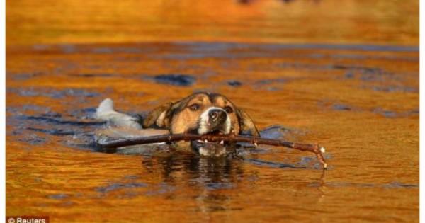 Οι κτηνίατροι προειδοποιούν: Μην πετάτε ξυλάκια στο σκύλο σας! Κινδυνεύει!
