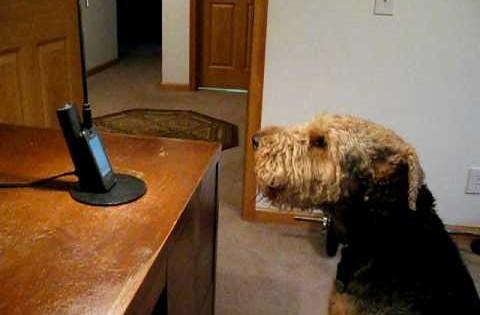 Σκύλος «μιλάει» στο τηλέφωνο