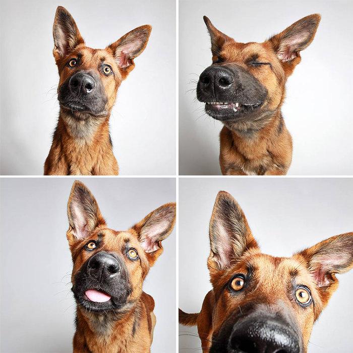 καμπάνια Εικόνες αδέσποτα σκυλιά