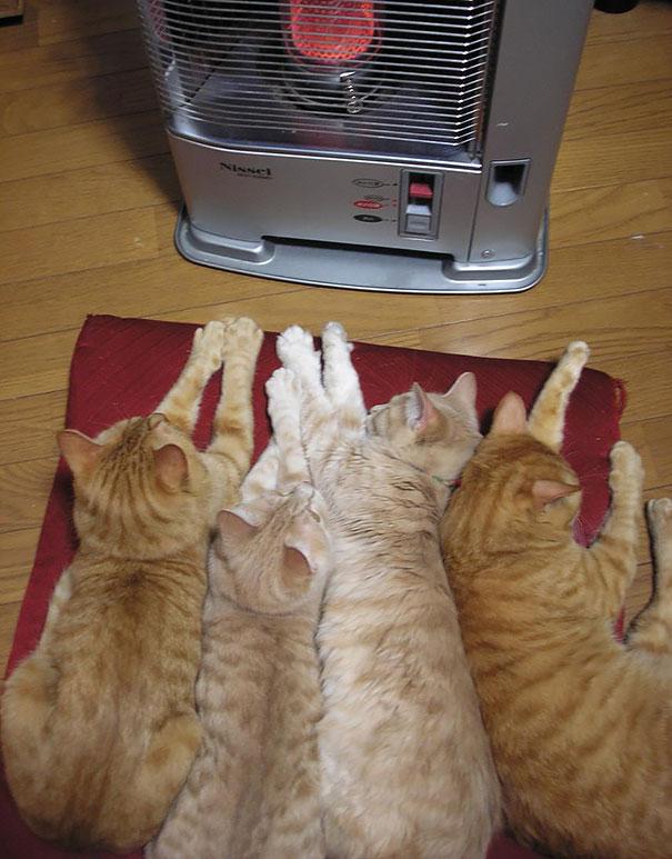 ζώα ζέστη