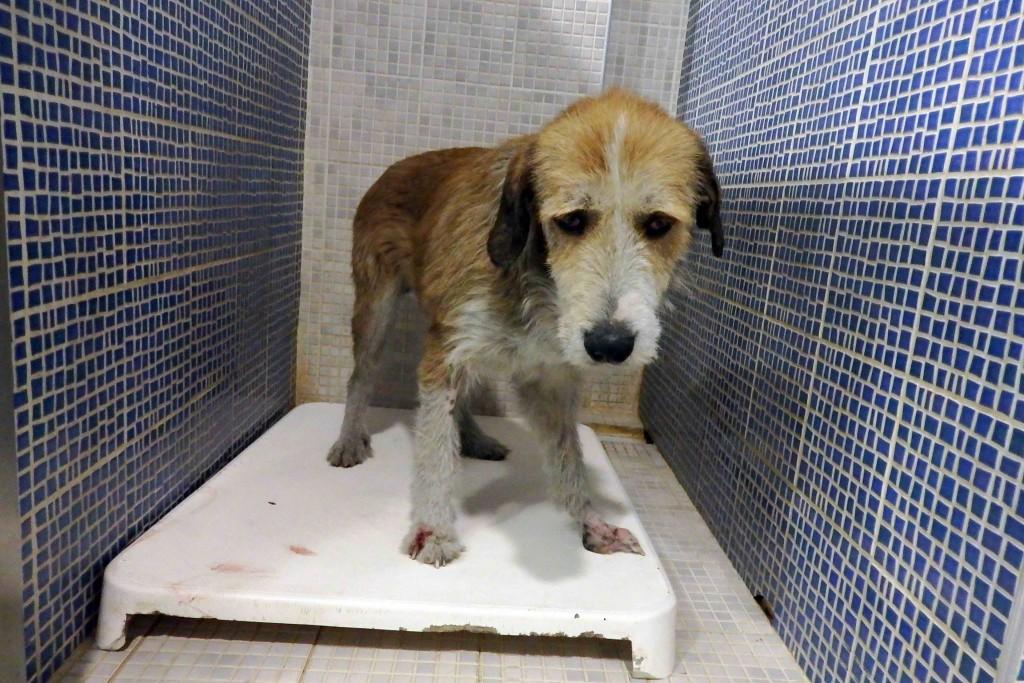 τραυματισμός Βοήθεια αδέσποτα σκυλιά Αδέσποτα