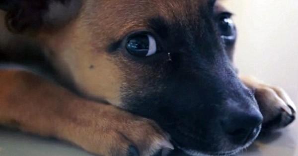 Τι γίνεται όταν αντικαθιστάς ζώα ράτσας με πρώην αδέσποτα (Βίντεο-Φωτογραφίες)