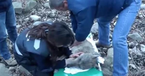 Έσωσαν αυτό το πλάσμα από το νερό. Οι γιατροί έμειναν άφωνοι με τα τραύματά του!