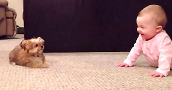 Άφησαν το μωρό τους στο πάτωμα, και τότε το κουτάβι τους έκανε κάτι που προκάλεσε τα γέλια του πατέρα! (Βίντεο)