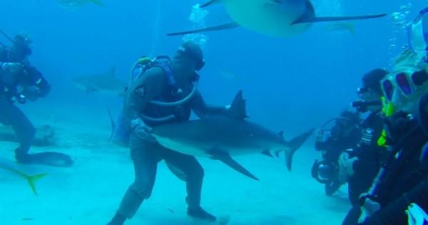 Πώς να υπνωτίσετε έναν επικίνδυνο καρχαρία (Βίντεο)