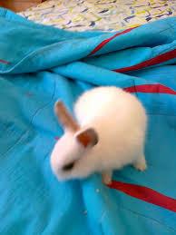Ταΐζοντας ένα μικρο κουνελάκι (Βίντεο)