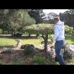 Αποφασισμένος δρυοκολάπτης (Βίντεο)