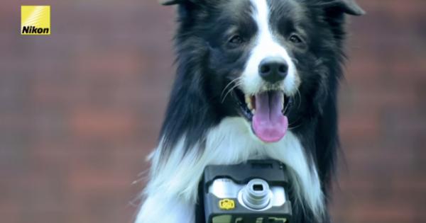 Έδωσαν σε ένα σκύλο μια φωτογραφική μηχανή! Δείτε το αποτέλεσμα!