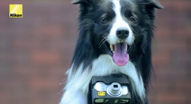 φωτογραφική μηχανή φωτογραφίες Σκύλος Nikon