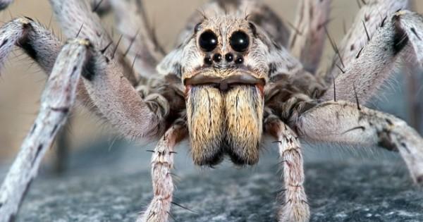 Οι καλές μανούλες του τρομακτικού ζωικού βασιλείου (Φωτογραφίες)