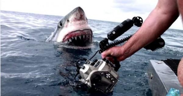 Το ξαφνικό «ντου» του καρχαρία (Βίντεο)