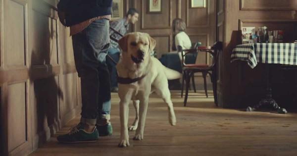Αυτός ο σκύλος-οδηγός τυφλών ανθρώπων, αφήνει τον ιδιοκτήτη του. Το γιατί, θα σας συγκινήσει. (Βίντεο)